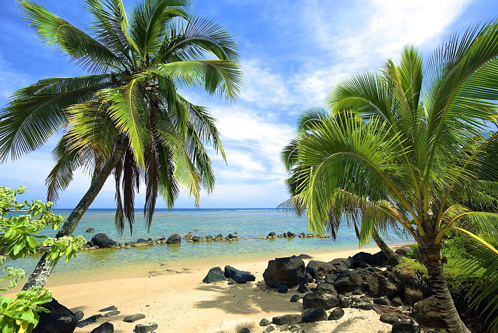Palm Trees On Anini Beach, Kauai, Hawaii, United States Of America