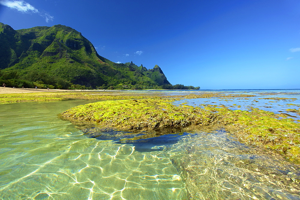 Coral And Seaweed On Tunnels Beach At Low Tide, Kauai, Hawaii, United States Of America