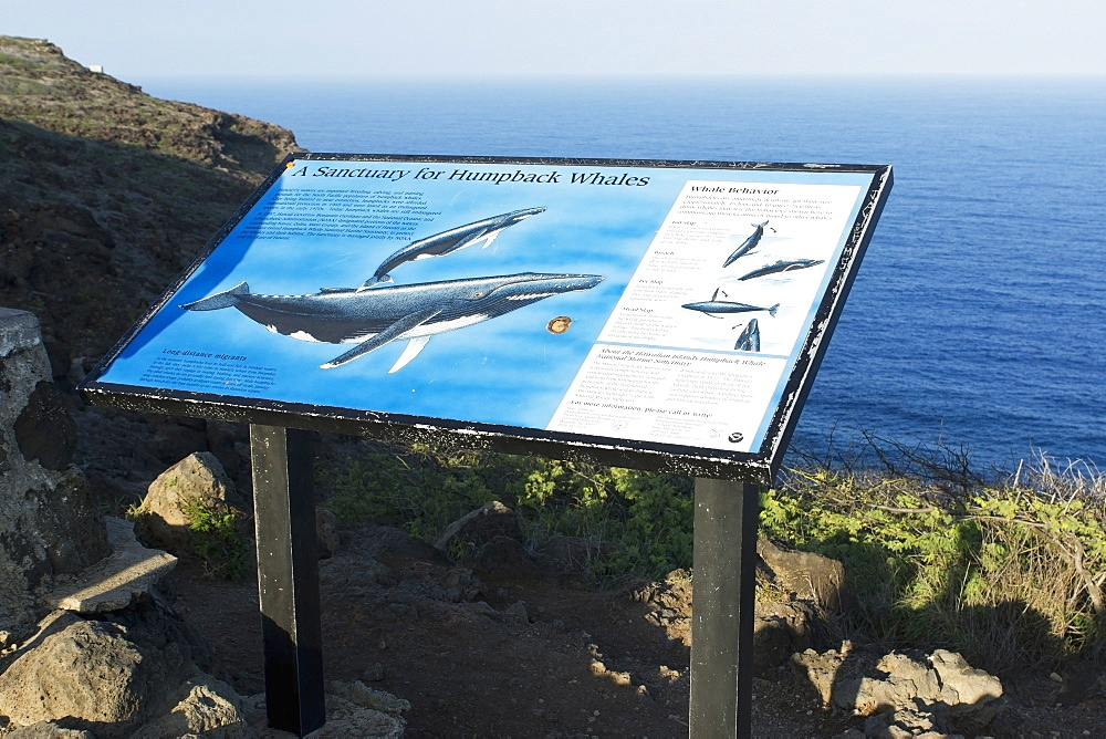 Whale Watching From A Scenic Spot, Makapuu, Oahu, Hawaii, United States Of America