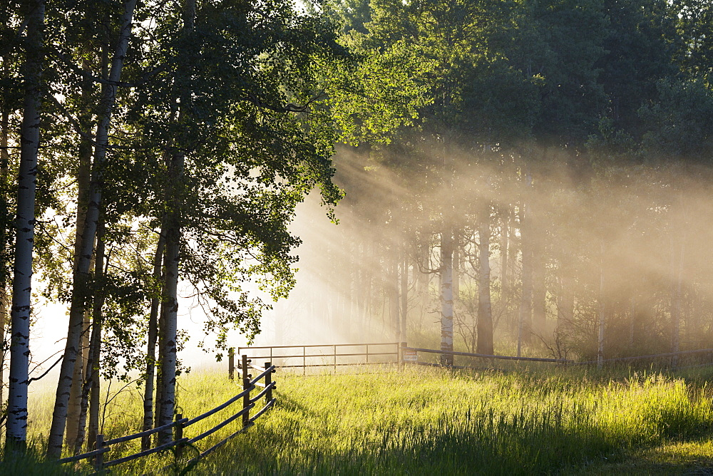 Early Morning Fog With Sunlight Streams Coming Through The Forest With A Wooden Fence And Grassy Field, Alberta, Canada