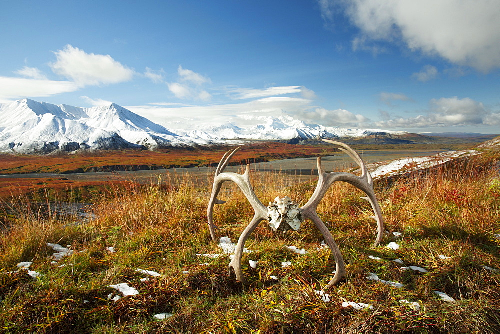 Caribou Antlers Sit On Tundra Near The Eielson Visitor's Center With Patches Of Melting Snow Following An Early Snow With Mt. Mckinley Partially Visible In The Background, denali National Park, Fall.