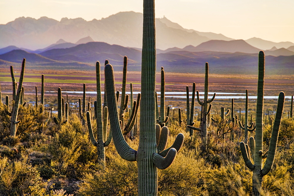 Saguaro National Park, Arizona, United States Of America