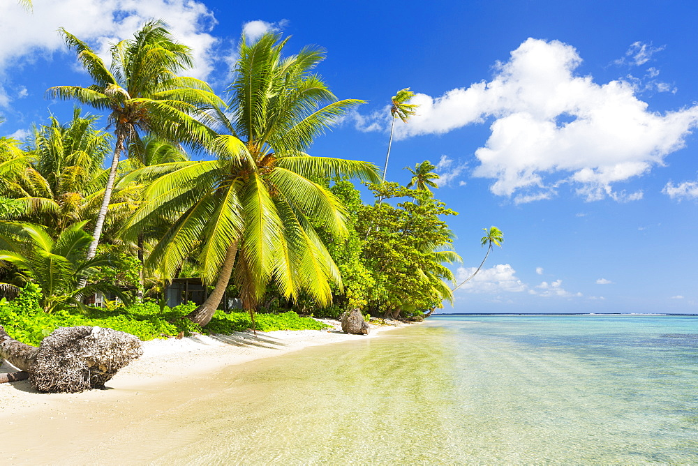 Tropical Sunny Island With Palm Trees And Blue Ocean, Raiatea, French Polynesia