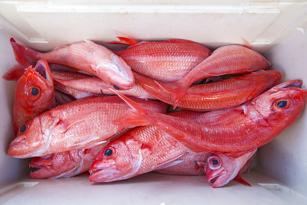 Fresh Caught Pink Fish In A Cooler, Tahiti
