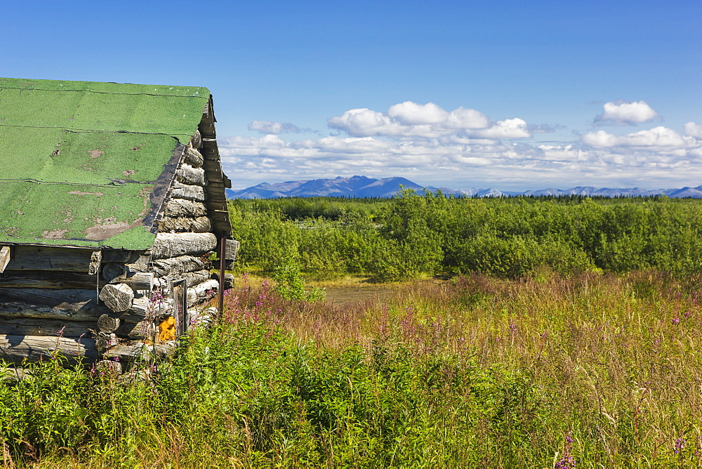 An Abandoned Cabin Surrounded By Fireweed On The Tundra On A Sunny Day, The Baird Mountains In The Background, Noatak, Alaska, United States Of America