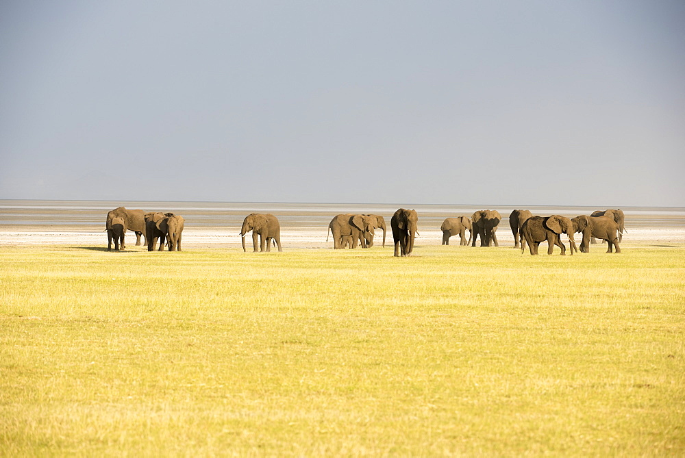 Herd Of Elephants In Lake Manyara National Park, Tanzania