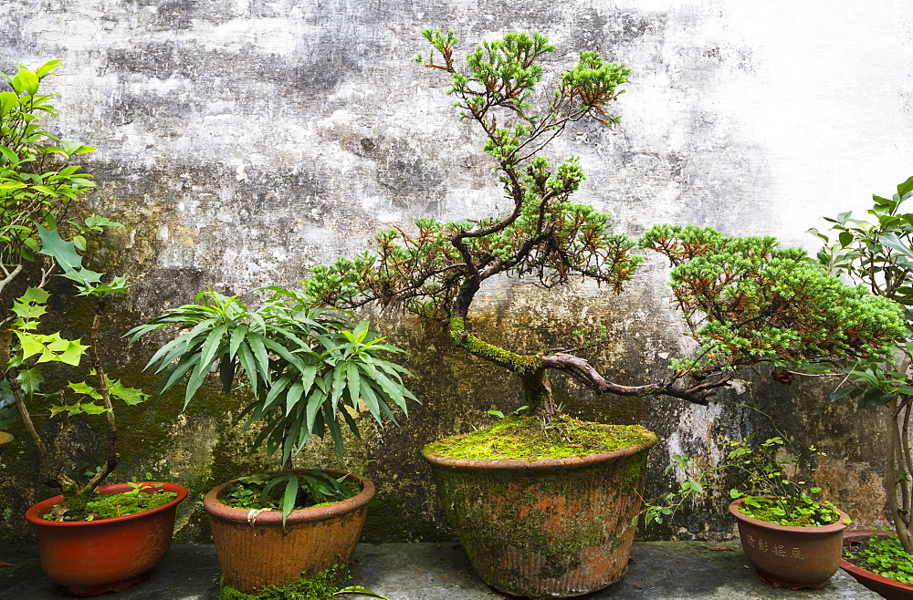 Potted Plants In Ruiyu Courtyard, Xidi, Anhui, China