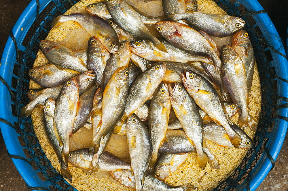 Small Fish In A Plastic Basket, Xiamen (Bashi) Local Market, Fujian, China