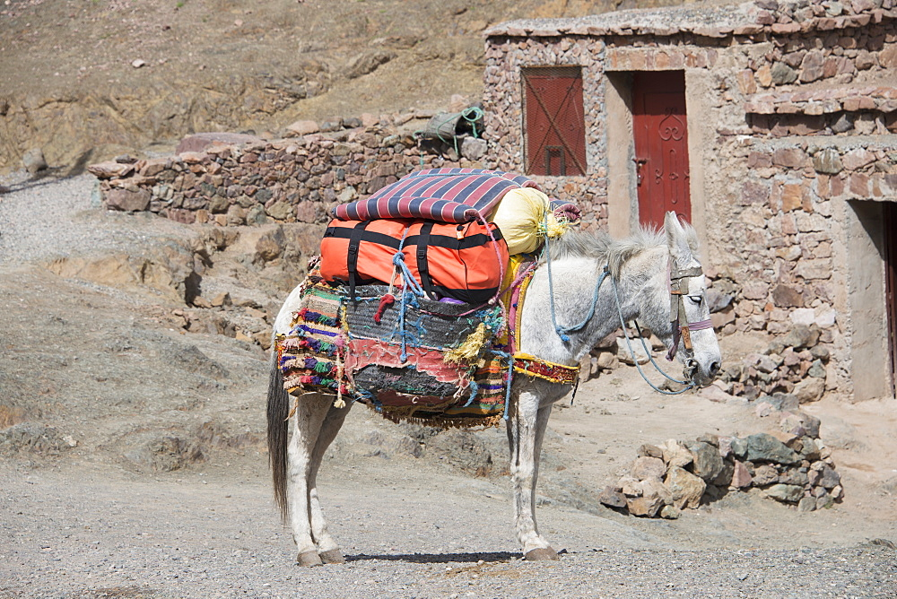 Rustic Scene Of Mule Carrying Supplies, Azilal, Morocco