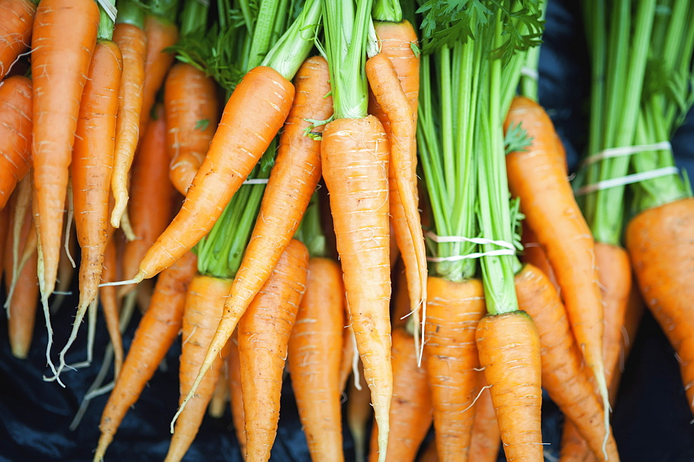 Bundles Of Freshly Picked Carrots, Palmer, Alaska, United States Of America