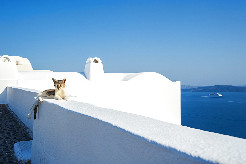 A Cat Lays On A Whitewash Wall With A View Of The Aegean Sea, Oia, Santorini, Greece
