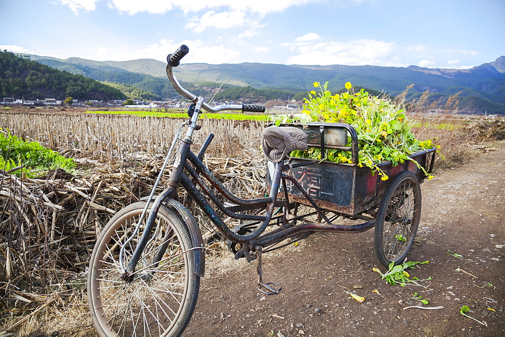 Three Wheeled Bicycle With Vegetables, Lijiang, Yunnan Province, China