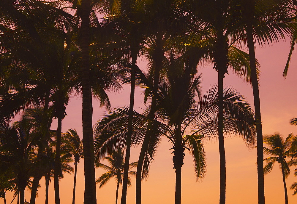 Palm Trees At Sunset, Mazatlan, Mexico