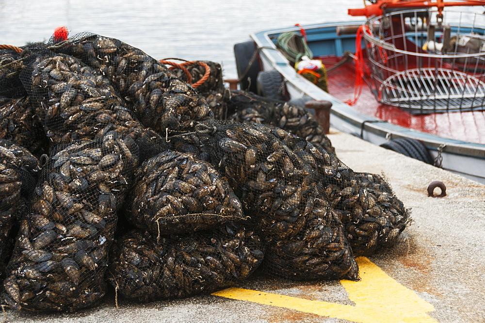 Mussels, Sanxenxo, Galicia, Spain