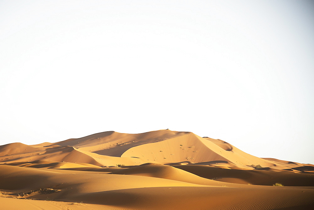 Desert Dunes Landscape Late In The Day, Sahara Desert, Merzouga, Morocco