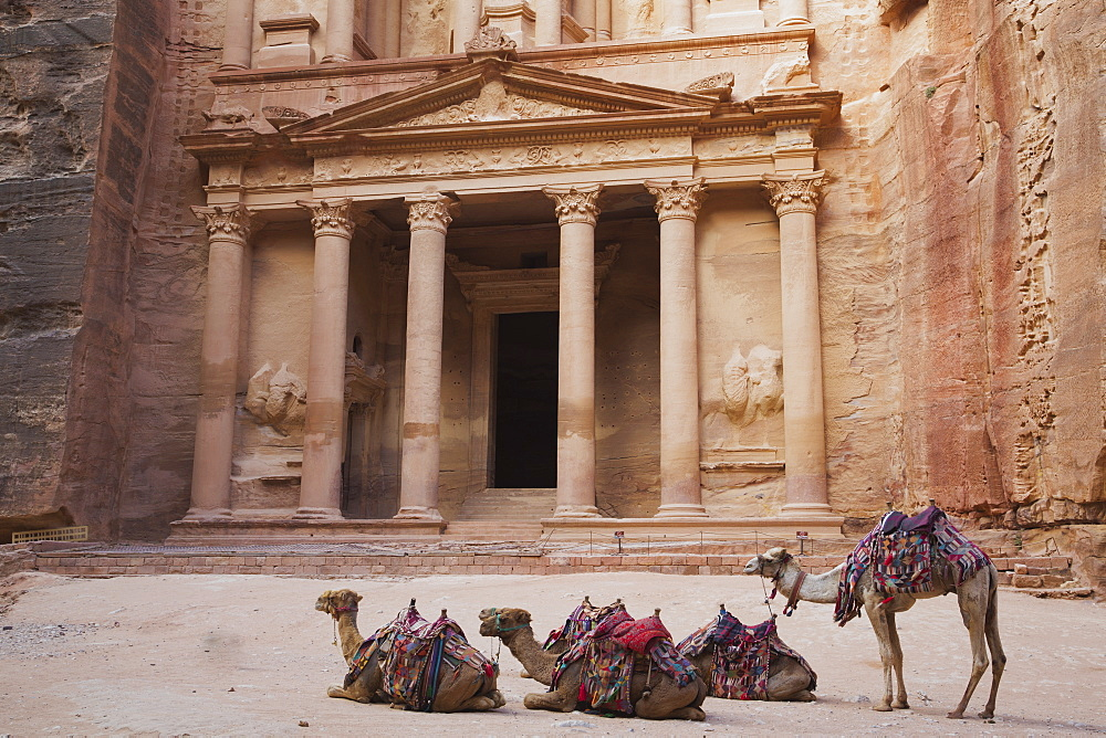 Camels In Front Of The Treasury, Petra, Jordan