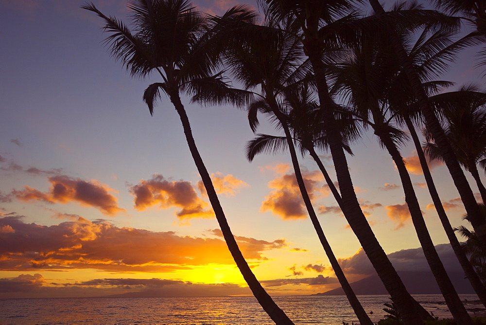 Sunset And Silhouette Of Palm Trees, Keawekapu, Wailea, Maui, Hawaii, United States Of America