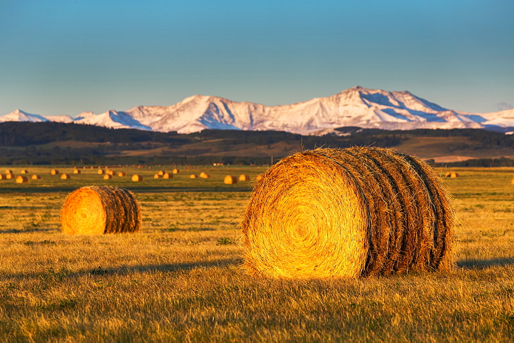 Large Round Hay Bales In A Field At Sunrise With Foothills And Snowy Mountain Range In The Background And Blue Sky, Alberta, Canada