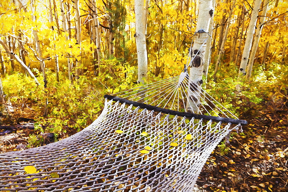 Classic Hammock Invites Visitors To Relax Among Aspen Trees In Bright Autumn Colors, Near Bishop, California, United States Of America