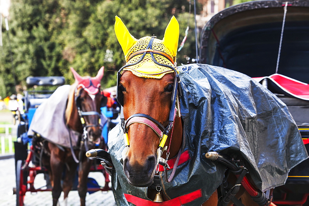 Decorated Horses Pulling Carriages, Rome, Italy