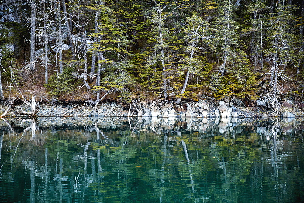 Evergreen Trees Growing Along The Shore Of Prince William Sound Reflect In The Calm Waters In Summertime, Prince William Sound, Whittier, Alaska, United States Of America