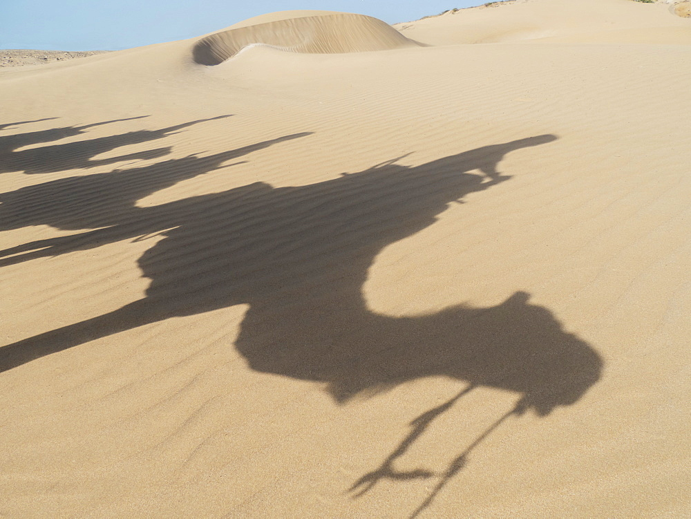 Shadows Of Camels And Tourists On A Beach Trek On The Sand, Essaourira, Morocco
