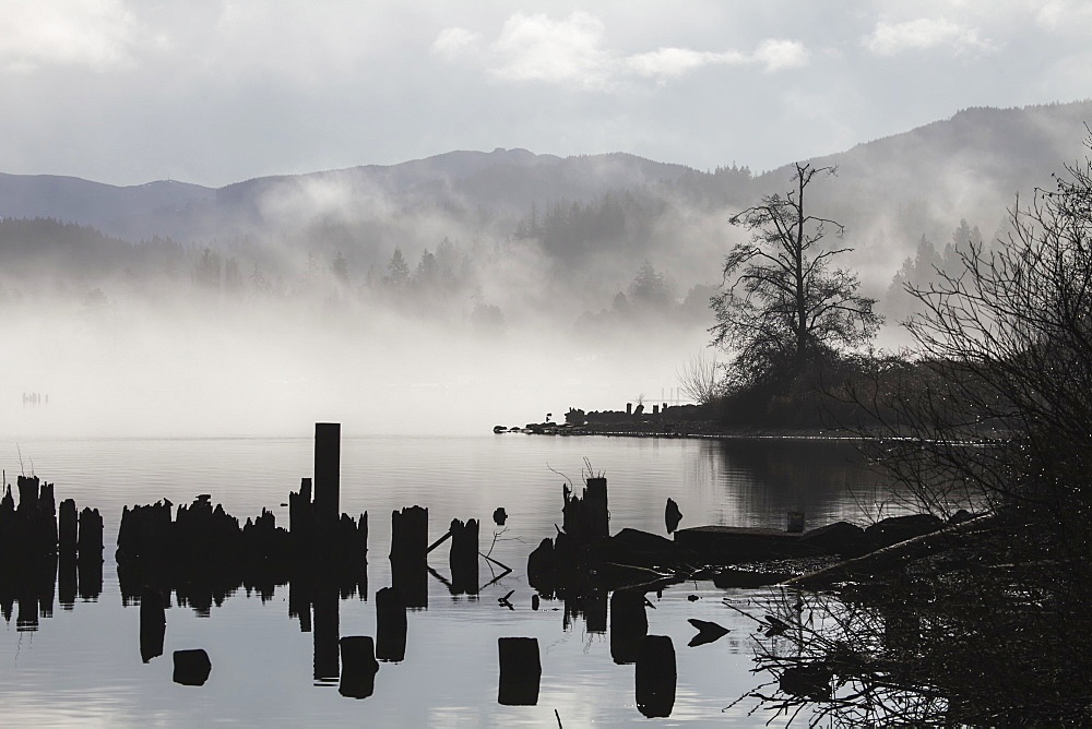 Foggy Mountain Lake Scene With Silhouettes Of Trees, Pilings, Bellingham, Washington, United States Of America