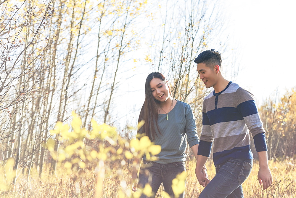 A Young Asian Couple Holding Hands While Walking Through A Park In Autumn And Enjoying The Warmth Of The Sunlight During The Early Evening, Edmonton, Alberta, Canada