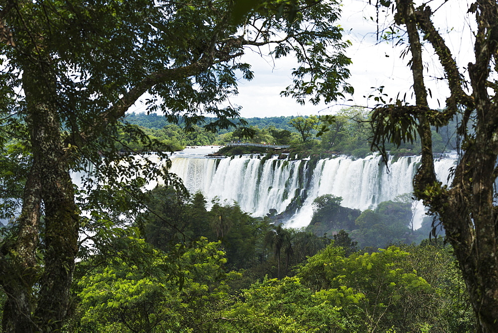 Iguazu Falls Seen Between Branches Of Trees, Parana, Brazil