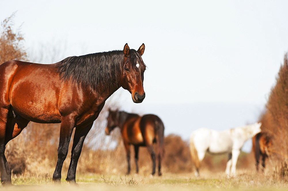 Wild Andalusian Horse At A Low Angle, Gainesville, Florida, United States Of America