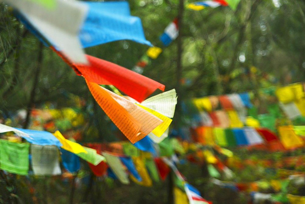 Beautiful Tibetan Flags In The Forest, Xiamen, Fujian Province, China