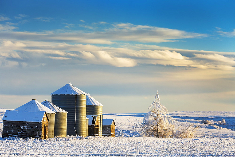 Snow Covered Metal And Wooden Grain Bins With Frosted Trees, Bushes And Stubble With Clouds And Blue Sky, Rosebud, Alberta, Canada