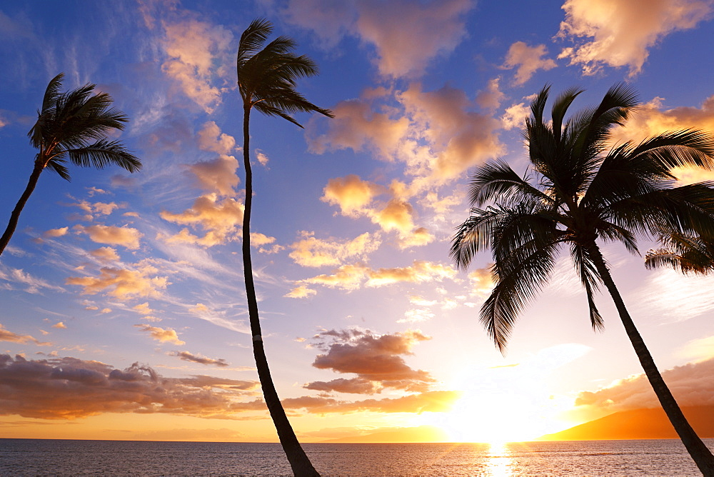 Sunset Palm Trees In Hawaii