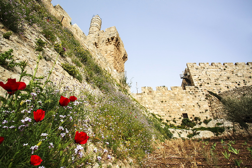 David's Citadel, Old City Walls And Wildflowers Growing On The Sloped Hillside, Jerusalem, Israel