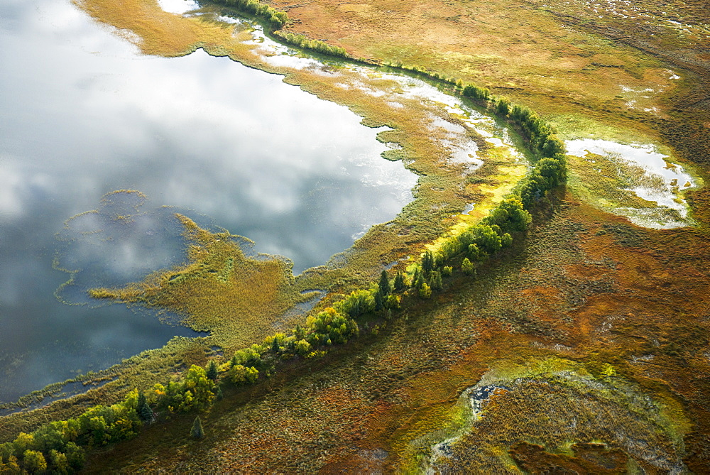Aerial Of A Wall Of Trees That Separate A Lake And Wetlands In The Kvichak River Drainage, Bristol Bay Region, Southwest Alaska
