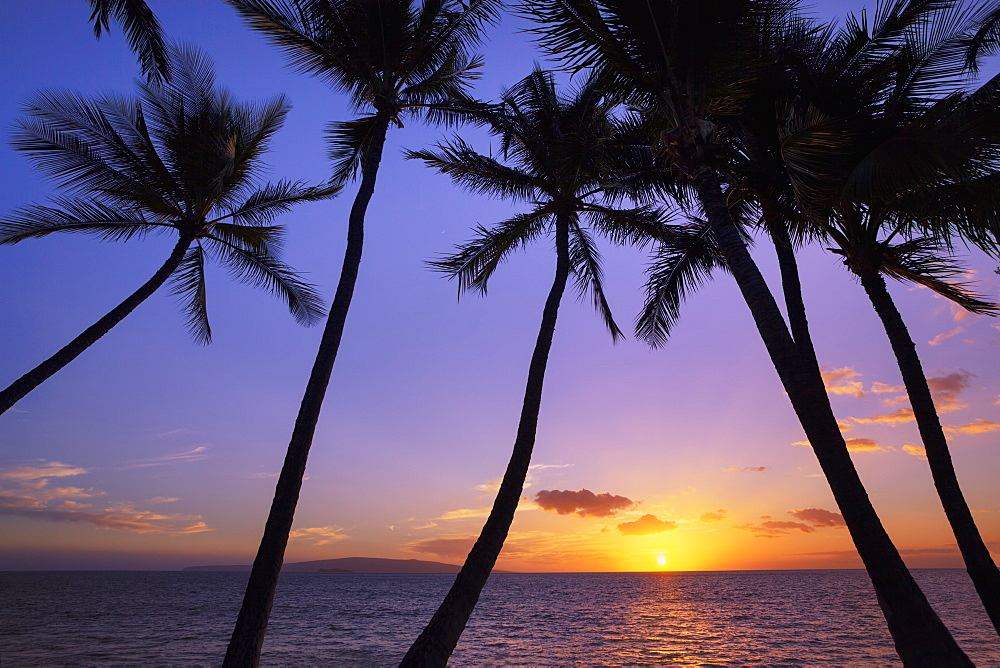 Silhouetted Palm Trees At Sunset, Wailea, Maui, Hawaii, United States Of America