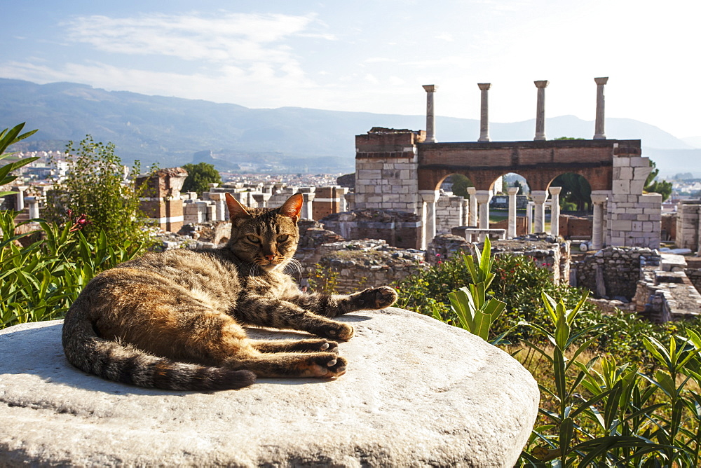 A Cat Lays In The Sun On A Rock At The Ruins Of Saint John's Basilica And The Tomb Of Saint John, Ephesus, Izmir, Turkey