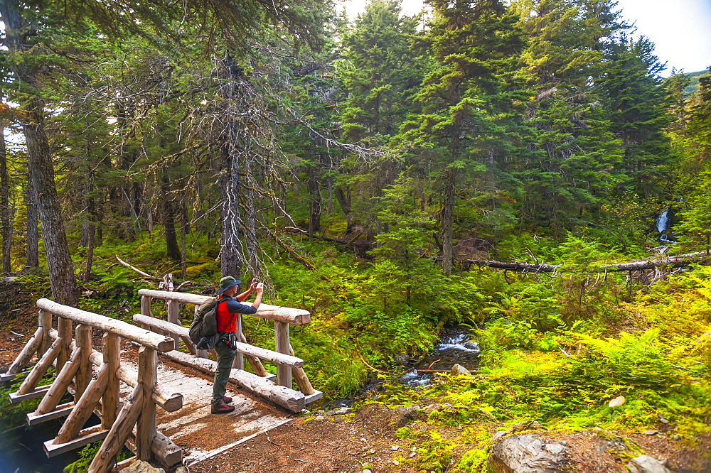 A Man Hiking Across A Log Bridge On The Turnagain Pass Trail In The Chugach National Forest, South-Central Alaska On A Summer Day, Alaska, United States Of America - 1116-46125