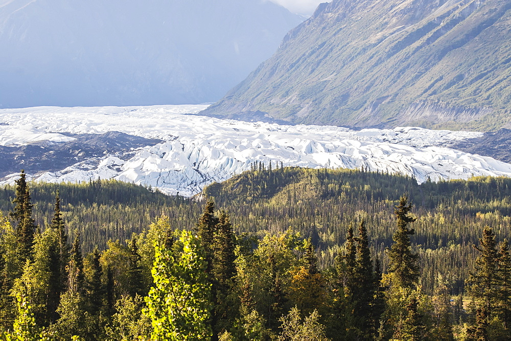 Matanuska Glacier Viewed From Glenn Highway Near Sheep Mountain, Colourful Summer Foliage Surrounding The Glacier, Alaska, United States Of America
