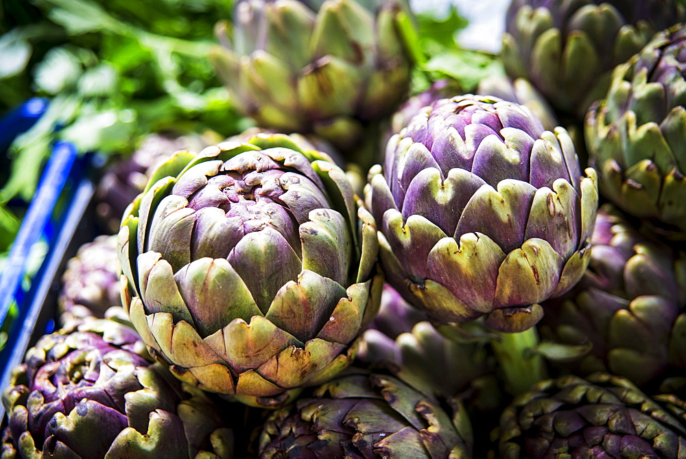 Roman Artichokes For Sale At Piazza Dell'unita Market, Rome, Italy