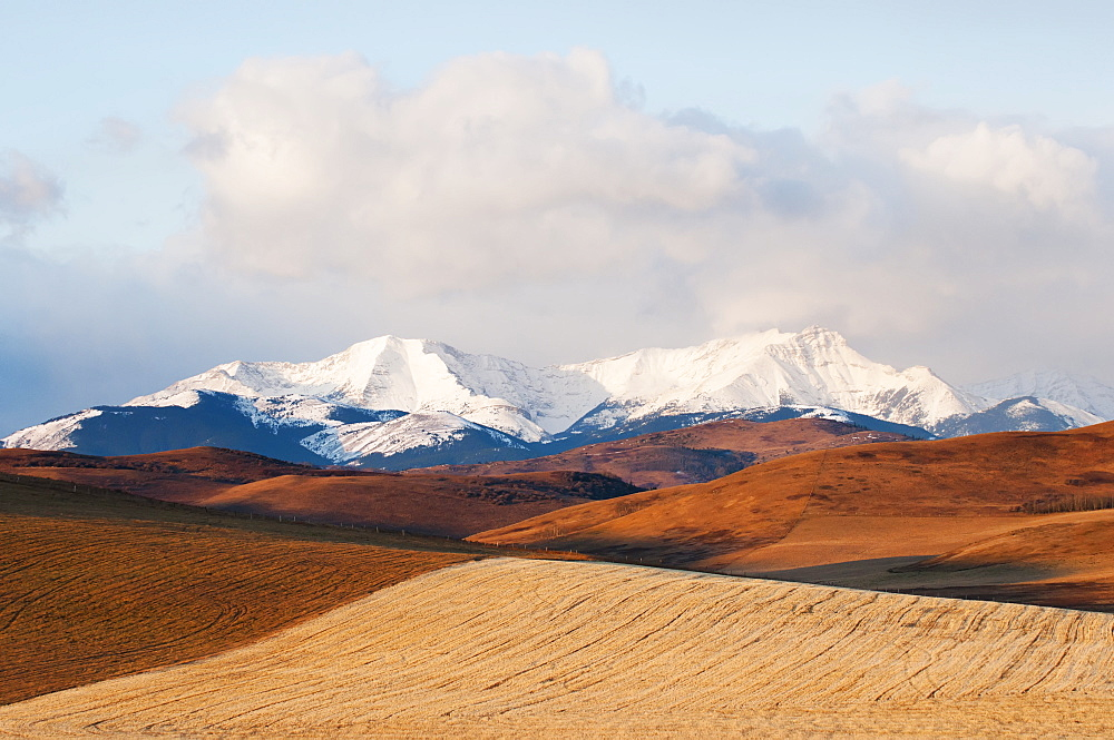 Alberta Landscape With Golden Fields In The Foothills And The Canadian Rockies In The Distance, Alberta, Canada