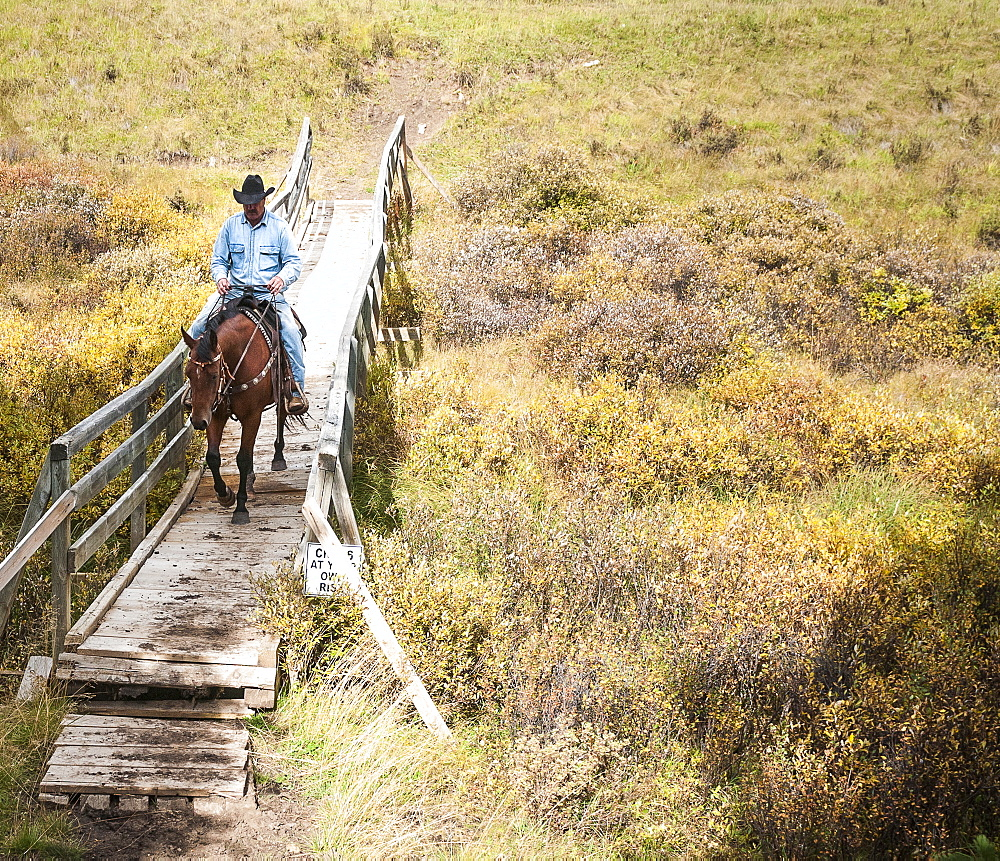 Cowboy And Horse Crossing Bridge, Clearwater County, Alberta, Canada