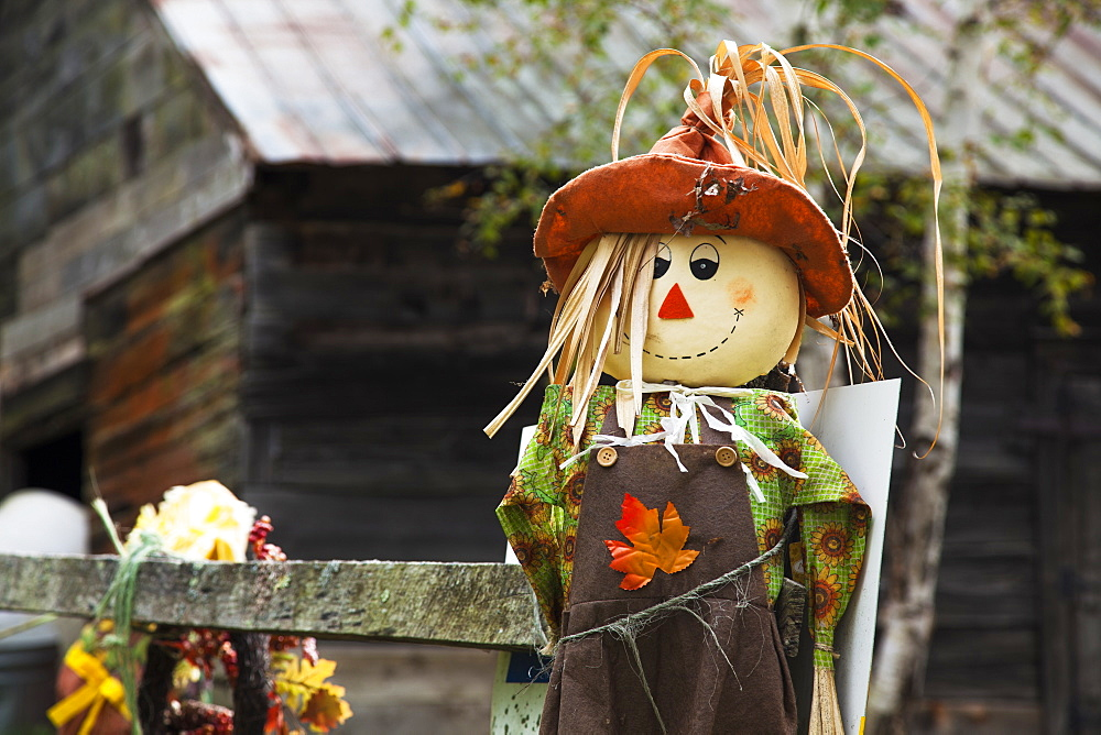 A Scarecrow At Sugarbush Farm, Woodstock, Vermont, United States Of America