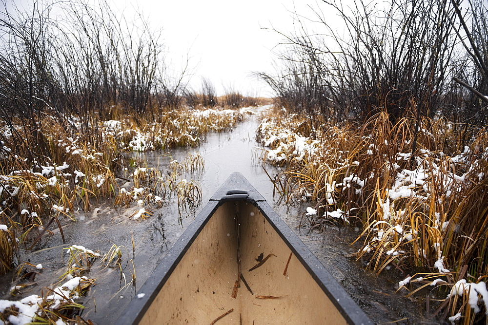 The Bow Of A Canoe Paddling Through Tall Reeds In Winter Mist, Cumberland House, Saskatchewan, Canada