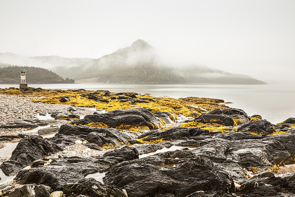 Seaweed and tide pools on the rocky shore along the Atlantic ocean coastline on a foggy day, Newfoundland, Canada