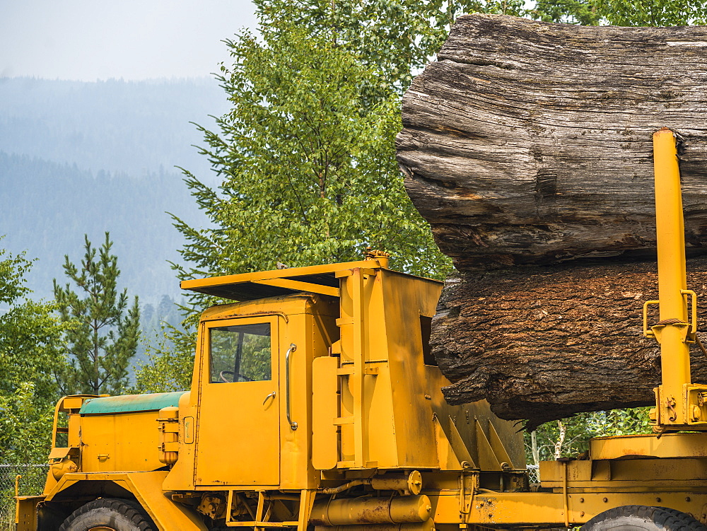 Large logs loaded on a yellow transport truck, Riondel, British Columbia, Canada