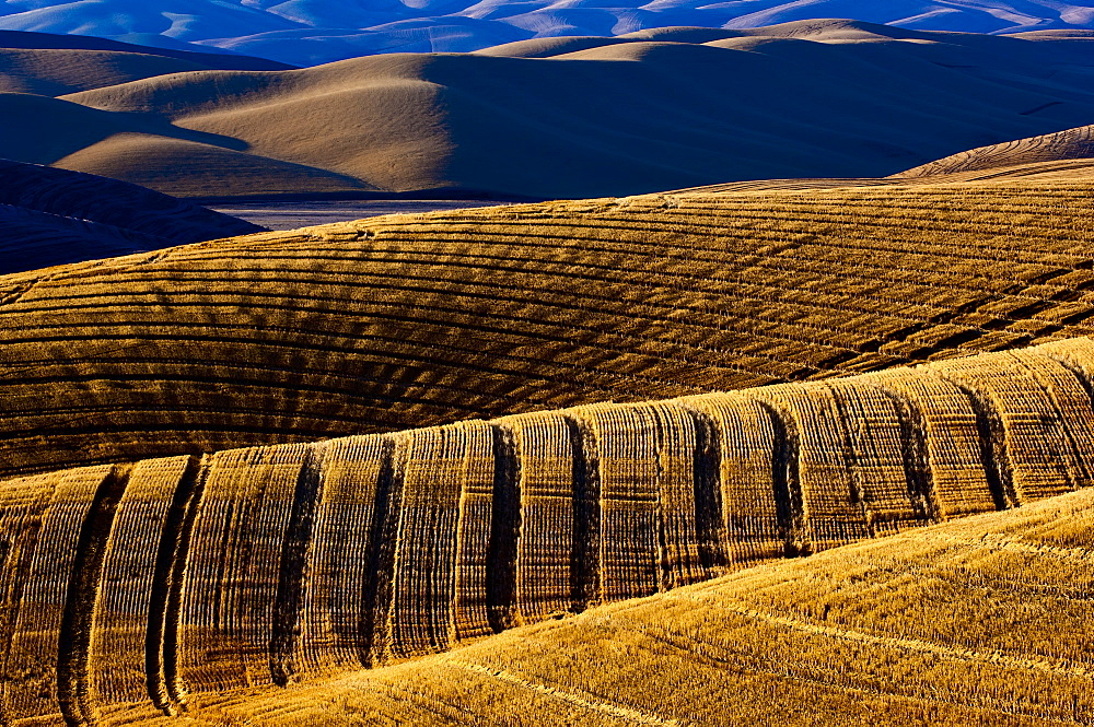 Harvested Fields On Rolling Hills With Shadows Cast At Sunset, Washington, United States Of America - 1116-46986