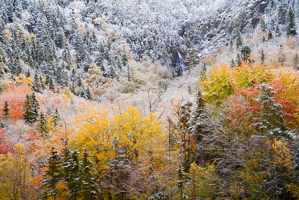 Waterfall And Autumn Colours In Snow On Sugarloaf Mountain, A Protected Crown Wilderness Area Along The Northeast Margaree River At Big Intervale, Cape Breton Island, Nova Scotia, Canada