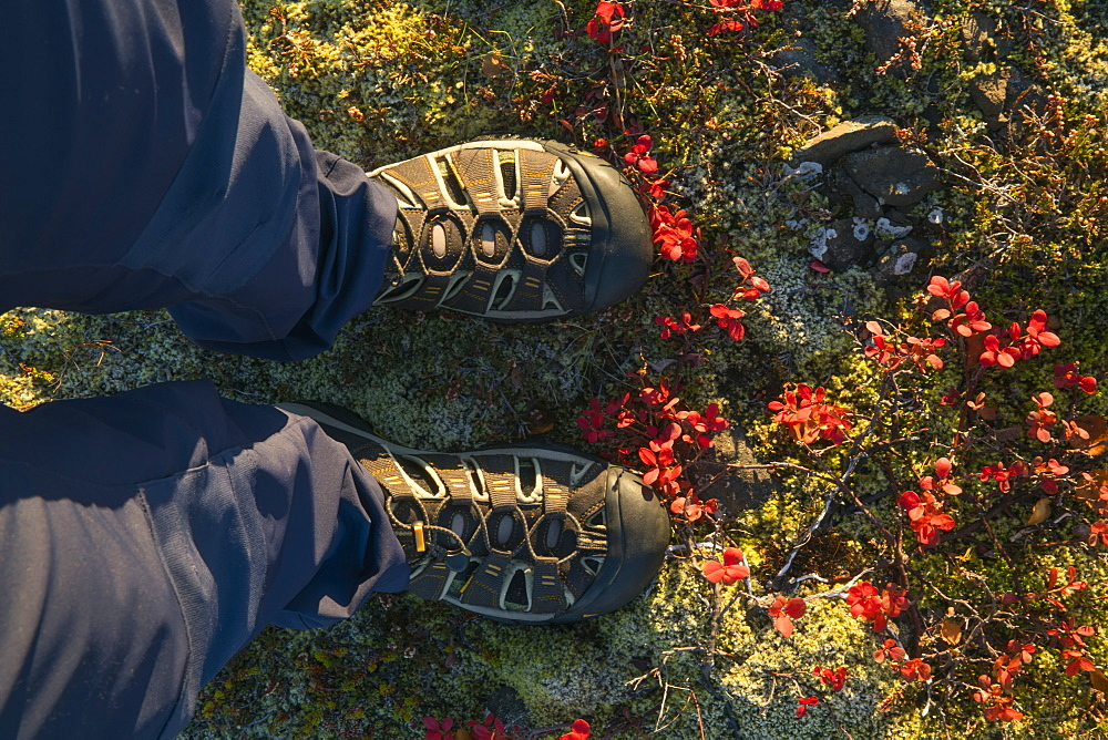 Feet Standing In The Colourful Tundra Along Iceland's South Coast, Iceland