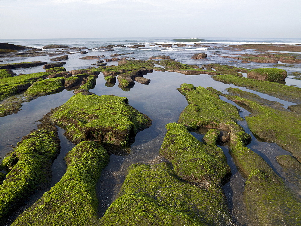 Moss Covered Ground Along The Coast Of Bali, Indonesia